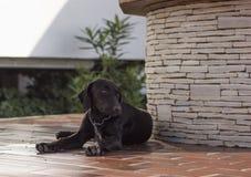 Hund som kyler precis Royaltyfria Bilder