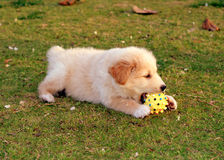Hund som leker på gräset fotografering för bildbyråer