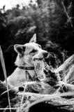 Hund som leker på gräset Abstrakt svartvit signal Arkivbilder