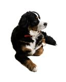 hund som ligger ner Arkivfoton