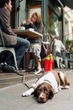 Hund som ligger på trottoaren utanför kafét Royaltyfri Bild