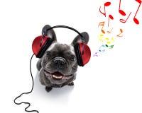 Hund som lyssnar till musik royaltyfria bilder