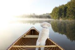 Hund som navigerar från pilbågen av en kanot Royaltyfri Fotografi