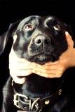 hund som omfamnar hans man Royaltyfri Bild