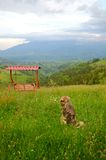 Hund som ser bergsikt Royaltyfria Bilder