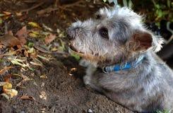 Hund som ser ett hopp Arkivbild