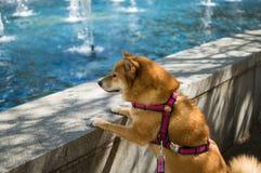 Hund som ser pölen Royaltyfri Foto