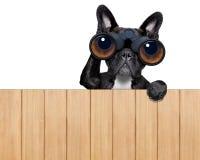 Hund som ser till och med kikare royaltyfri fotografi