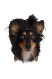 hund som ser upp Arkivfoto