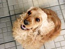 hund som ser upp Royaltyfria Bilder