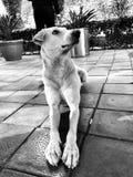 hund som ser upp fotografering för bildbyråer