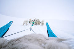Hund som sledding den Qeqertarsuaq Grönland Royaltyfria Bilder