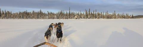 Hund som sledding i Lapland Fotografering för Bildbyråer