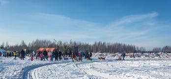 Hund som sledding på festivalvintergyckeln i Uglich, 10 02 2018 in Arkivfoto