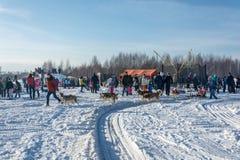 Hund som sledding på festivalvintergyckeln i Uglich, 10 02 2018 in Fotografering för Bildbyråer