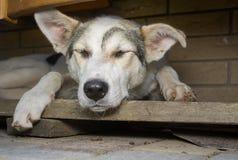 Hund som sover i dess avskilda hörn Arkivbild