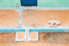 Hund som sover och vilar den främsta gården arkivbilder