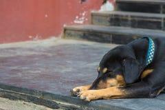 Hund som sover på trappuppgång Arkivbild