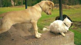 Hund som spelar med en katt Valp och två katter Katter är ilskna lager videofilmer