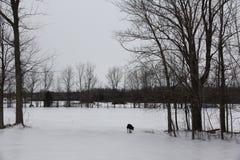 Hund som spelar med pinnen i vinter Fotografering för Bildbyråer