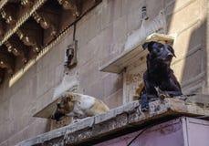 Hund som spelar på den gamla staden royaltyfria foton