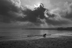 Hund som spelar på stranden i morgonsol Arkivbilder