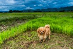 Hund som spelar utvändiga leenden Royaltyfria Bilder