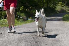 Hund som trekking Arkivfoton