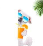 Hund som tycker om en coctail Arkivfoto