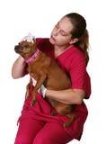 hund som undersöker den veterinär- kvinnan Arkivbild