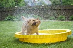 hund som upprör ut vatten arkivfoton