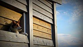 hund som ut ser fönstret Arkivfoto