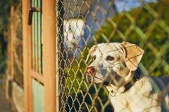 Hund som väntar bak staketet royaltyfri foto