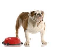 Hund som väntar för att matas arkivbilder