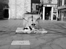 Hund som väntar hans förlage arkivbilder
