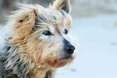 Hund som väntar på dess ägare. Arkivbild