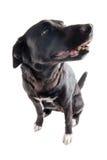 Hund som väntar på en fest Arkivbild