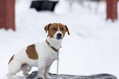 Hund som väntar på hans förlage royaltyfria foton