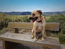 Hund som vilar på bänk Arkivfoton
