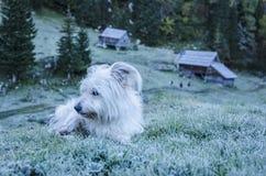 Hund som vilar på den djupfrysta ängen Royaltyfri Fotografi
