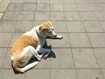 Hund som vilar på gatan med solljus Arkivfoto