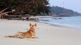Hund som vilar på stranden Royaltyfria Bilder