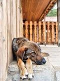 hund som vilar utomhus Royaltyfri Fotografi