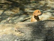 Hund spielt Lizenzfreie Stockfotografie