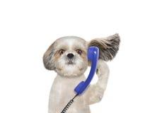 Hund spricht über dem alten Telefon Stockfotografie
