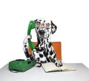 Hund spricht über dem Telefon Stockbilder