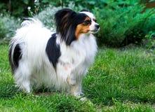 Hund steht mit der angehobenen Tatze Lizenzfreie Stockfotos