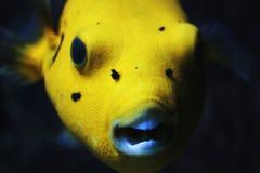 Hund stellte Pufferfish gegenüber Stockfotos