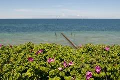 Hund stieg vor dem Meer Stockfotografie
