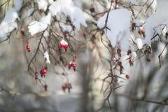 Hund stieg in Winter draußen lizenzfreies stockfoto